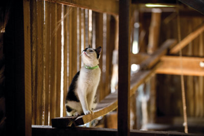 cat in a barn looking up