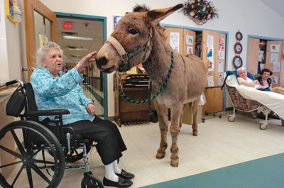 assisted living resident in a wheelchair petting one of the burros