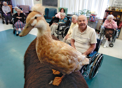 duck perched on the back of a couch with some assisted living residents in the background