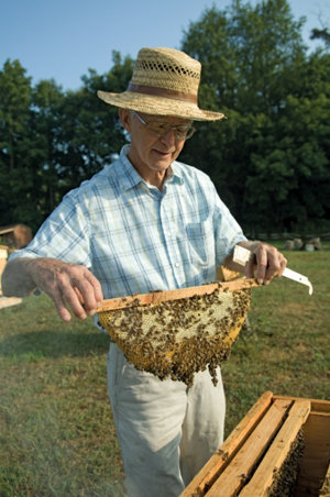 Gunther Hauk holding a honeycomb covered with bees