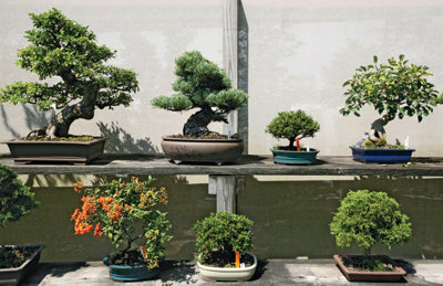 a display of several bonsai trees