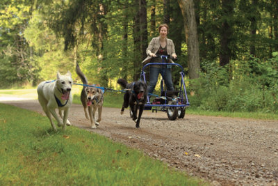 three dogs pulling Amanda along an exercise trail