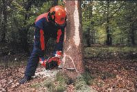 man using chainsaw to cut down a tree