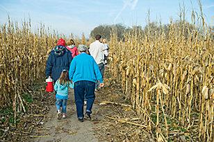 Corn Maze - Tractor Supply Co.