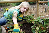 Build Your Own Raised Bed Kitchen Garden