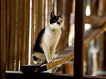 Cat sitting in a barn.
