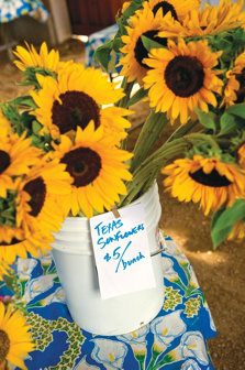 watering can filled with sunflowers and sign: 'Texas Sunflowers $5/bunch'