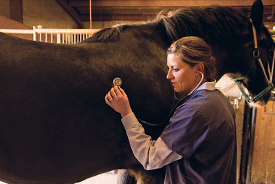 Dr. McCarty checking the heartbeat on a horse