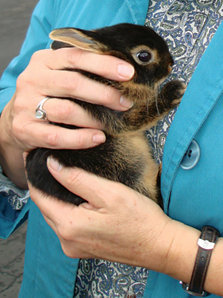 a baby rabbit being held
