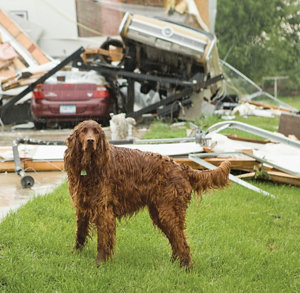 a wet dog standing in front of a wrecked home