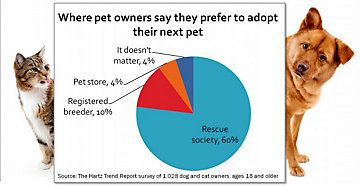 Why Pet Adoption is the Best Choice for Families Looking for a New Dog or Cat