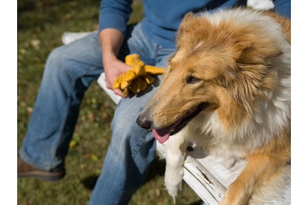 Vaccinating Cats and Dogs | Tractor Supply Co