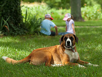 Dog laying in the grass near two children.