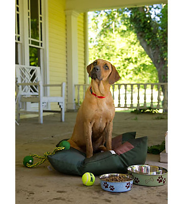 Large dog sitting on a front porch with dog toys and food bowl.