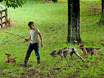 Boy playing with dogs.