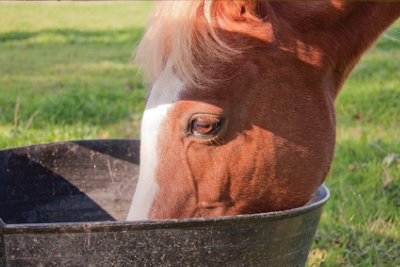 a horse with it's head in a trough