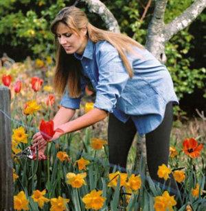 woman tending buttercups in a garden