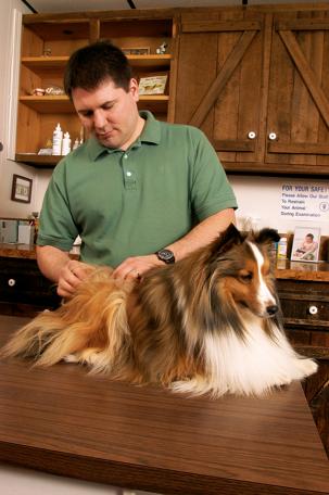 man examining a dog's coat