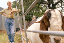Carol standing next to some young goats in temporary fencing