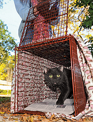 a feral cat being released from a cage