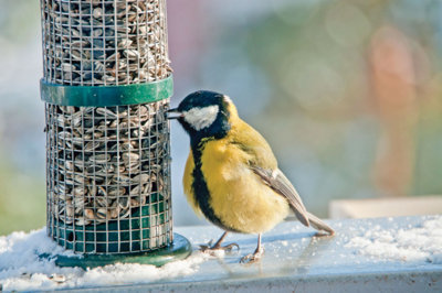 bird eating from a feeding tube
