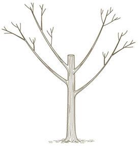 illustration of a pruned tree