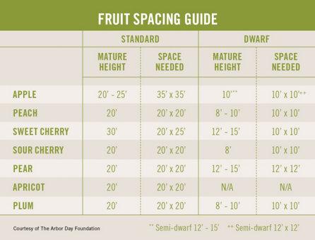 Fruit Spacing Guide table