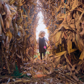 little girl standing at the edge of an unharvested corn row in the fall