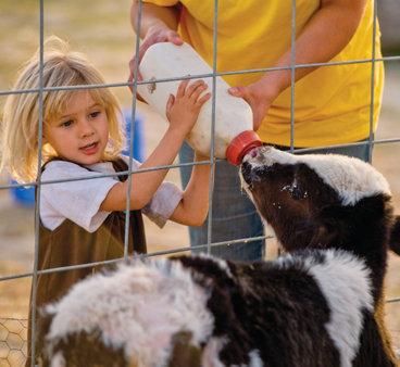 little girl bottle feeding a goat through the fence
