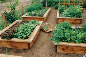 raised bed - Raised Beds Garden
