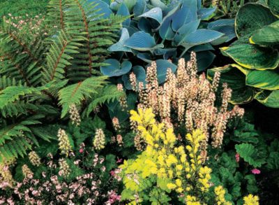 Use Shade Plants In Your Shade Garden