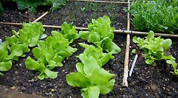 Grow More In Less Space With Raised Bed Gardens