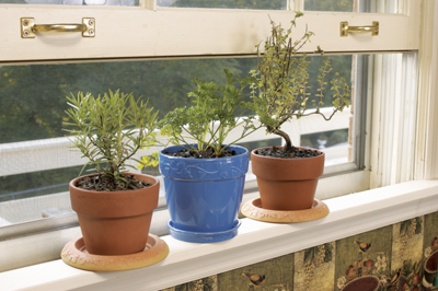 herbs in flower pots growing on the kitchen windowsill