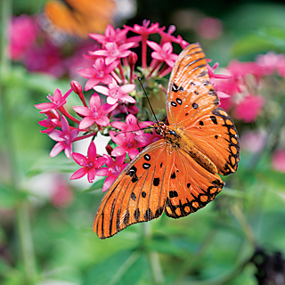 butterfly feeding on a flower