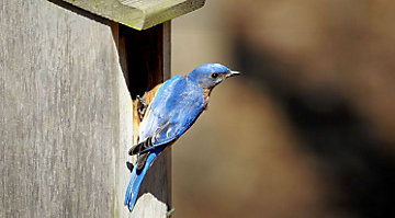 Hanging birdhouses to attract specific species bird for Types of birdhouses for birds