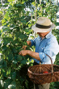 man with a hat working in a garden