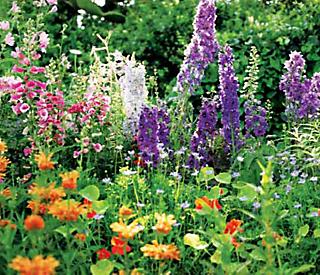 heirloom flowers — foxglove, delphinium, and nasturtiums