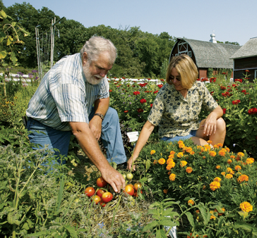 Kent and Diane working with some tomatoes