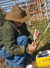 rancher preparing a hypodermic needle for use on a cow