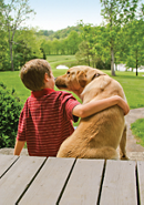 back view of a boy and his pet dog sitting on some porch steps with the dog nosing the boy's face