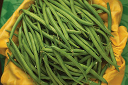 uncut green beans before processing