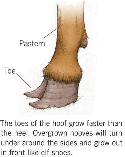 Learn How and When to Trim Your Goats\' Hooves | Tractor Supply Co.