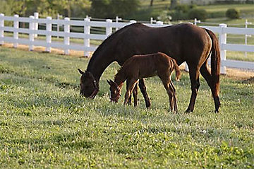 Mare and foal grazing in a field.