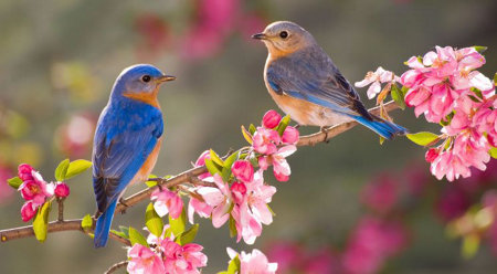 A variety of trees, shrubs, and flowers will help attract birds.