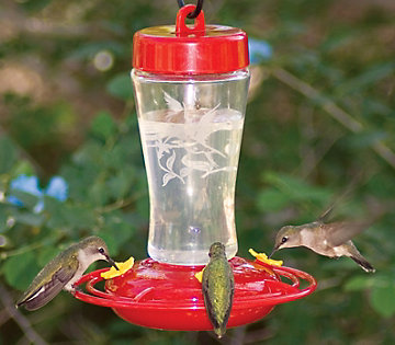 hummingbird feeder buying guide | bird feeders and houses, Fish Finder