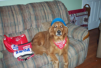golden retriever lounging on a couch wearing a TSC P.A.W. bandana with other P.A.W. goodies also on the couch
