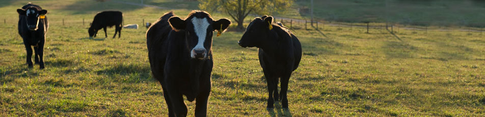 Q and A: Answers to the Most Frequently Asked Questions about Cattle Care