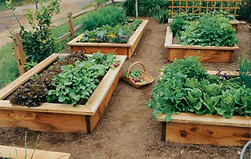 learn how to build a raised garden bed - Garden Bed