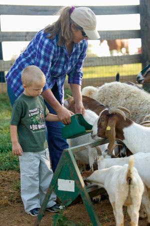 Karen feeding the goats