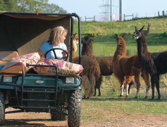Sandra driving through the farm on a cart